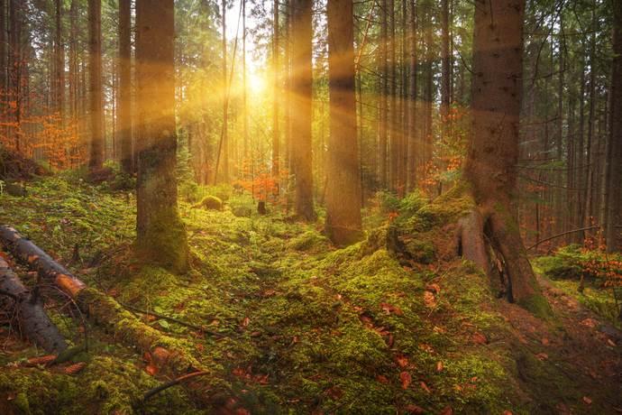 leggenda-alberi-sempreverdi