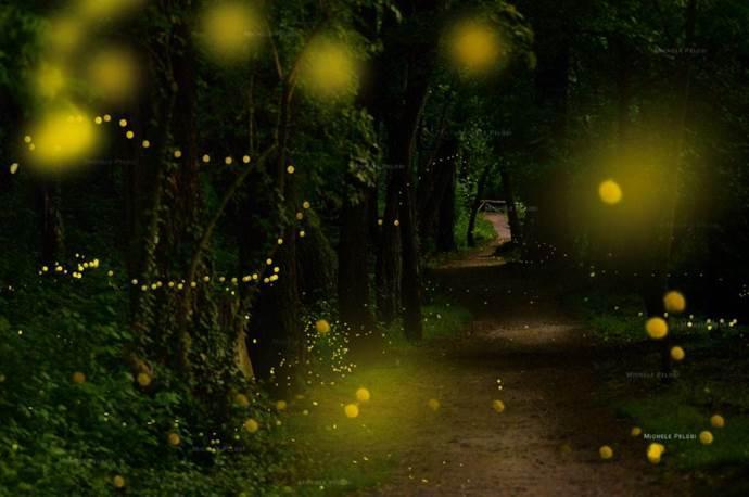 lucciole dove ammirare
