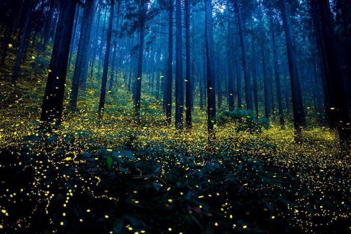 lucciole parco delle cave