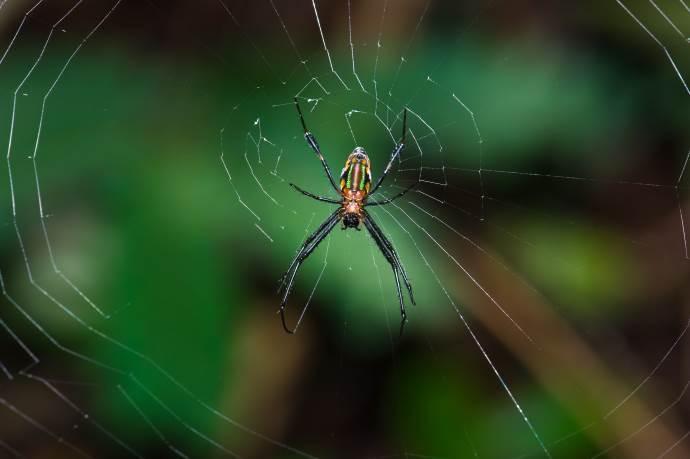 non uccidere ragni