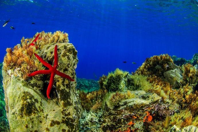 stella marina Eolie