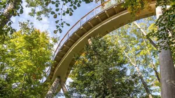 treetop walk svizzera