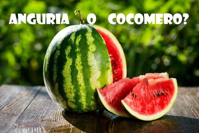anguria_cocomero