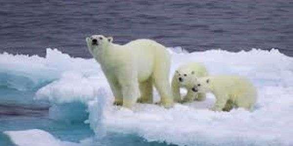 Risultati immagini per orso polare site:greenme.it