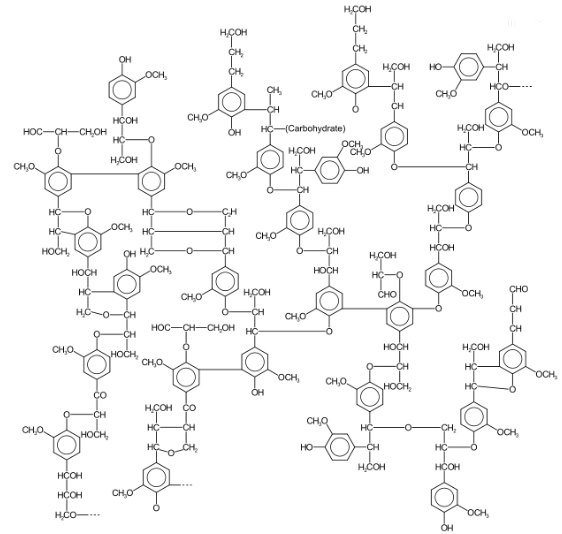 enzimi lignina
