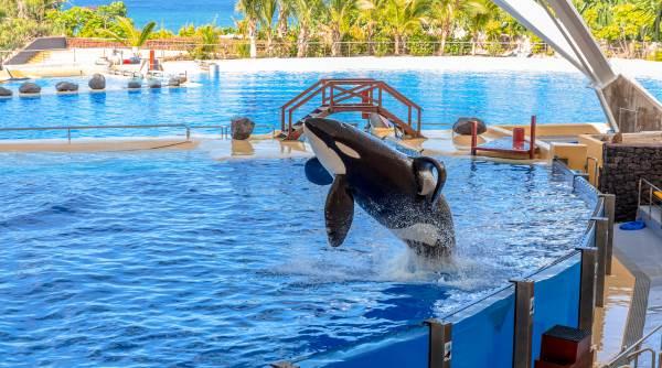 orca zoo1