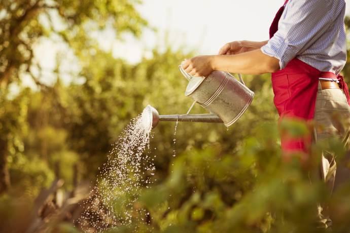 lavori orto agosto