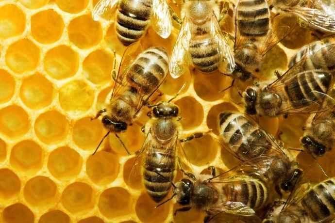 api ragioni scientifiche bisogno