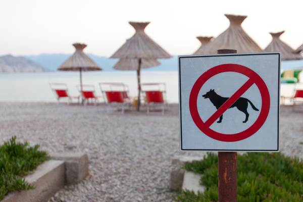 cani spiaggia1