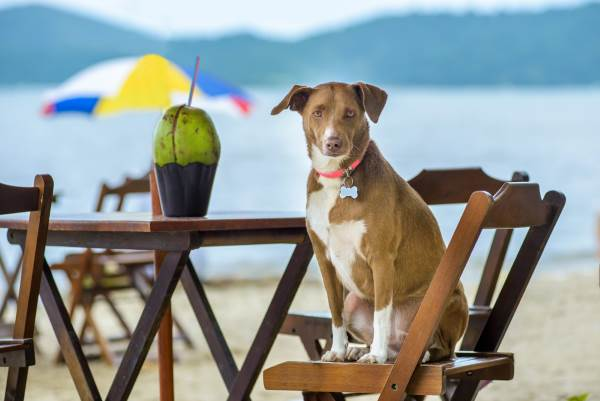 cani spiaggia2