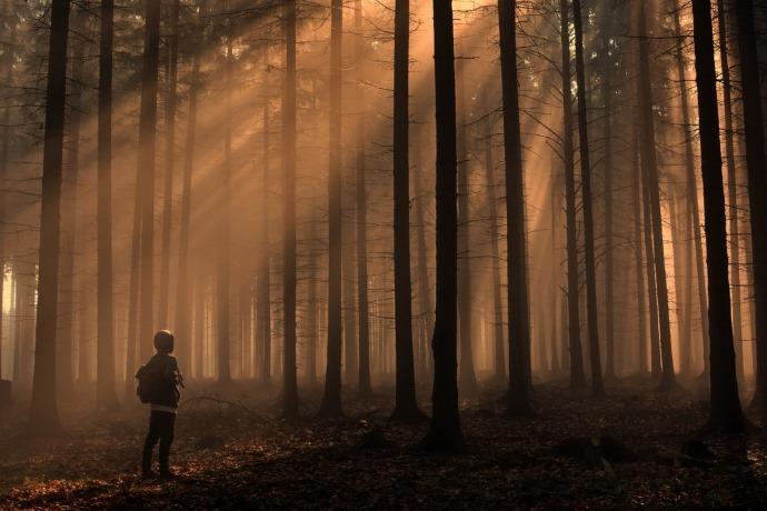 Foreste e nutrizione