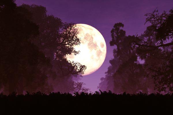 luna storione