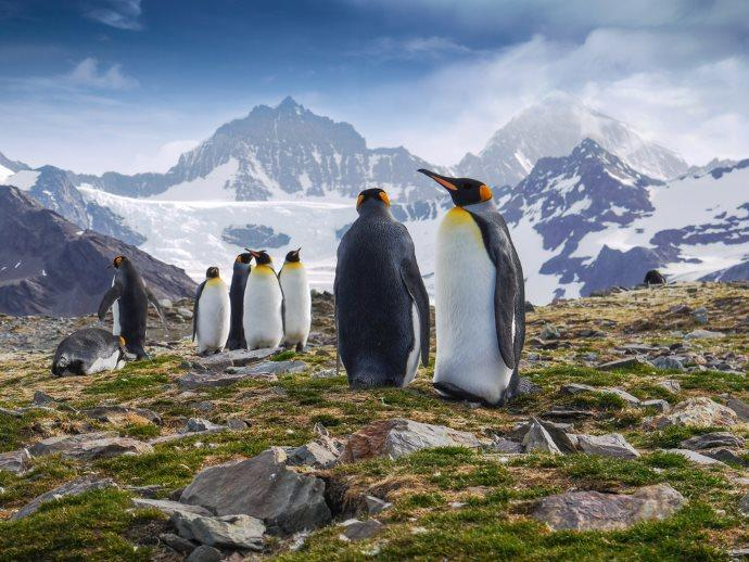 Pinguini reali