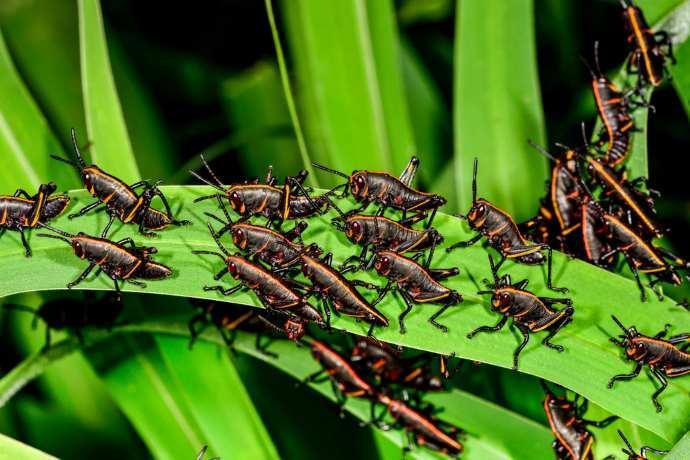 cambiamenti climatici insetti infestanti