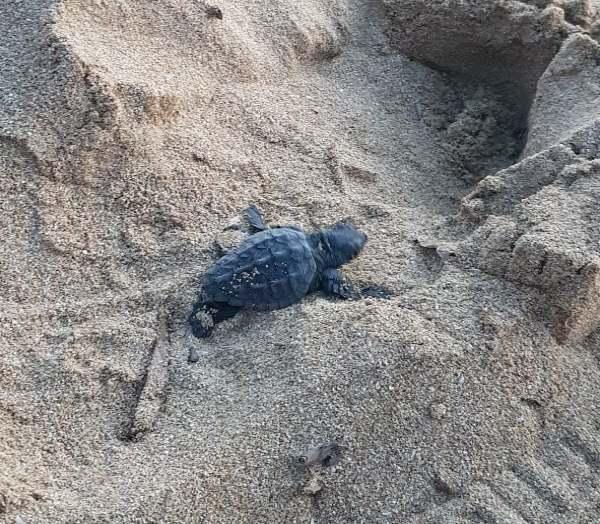 tartarughe sicilia