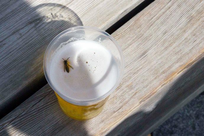 vespe ubriache frutta decomposizione