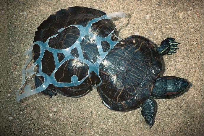 Animali Da Giardino In Plastica.Le Terribili Immagini Dell Inquinamento Degli Anelli Di Plastica