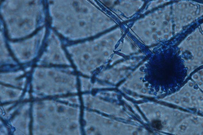 funghi mangia plastica