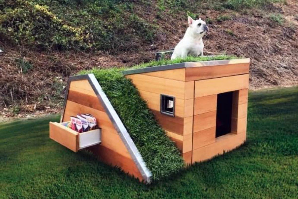 Come Costruire Una Cuccia la cuccia dei sogni: tetto verde e una ventola a energia