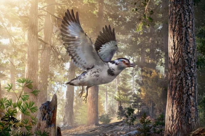 dinosauro uccello