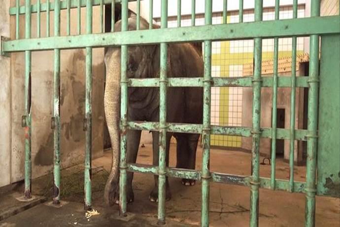 fuko-elefante