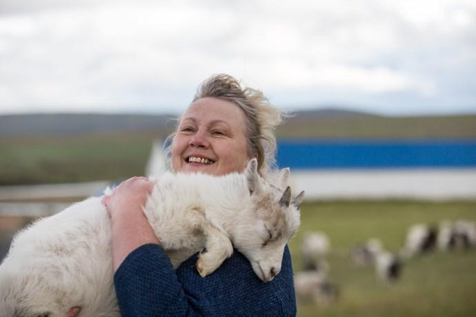 Johanna capre islandesi