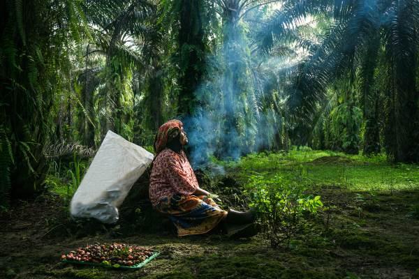 olio di palma cert1