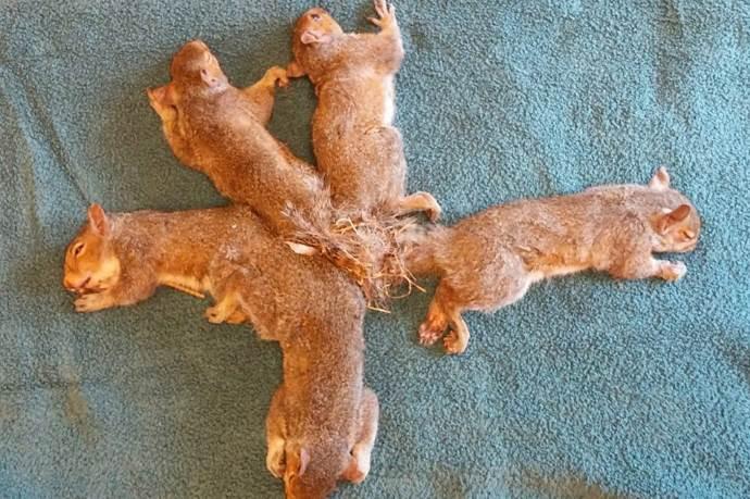 scoiattoli-plastica