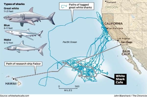 tana squali