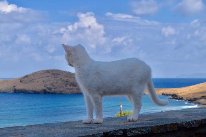 annuncio lavoro gatti Turchia