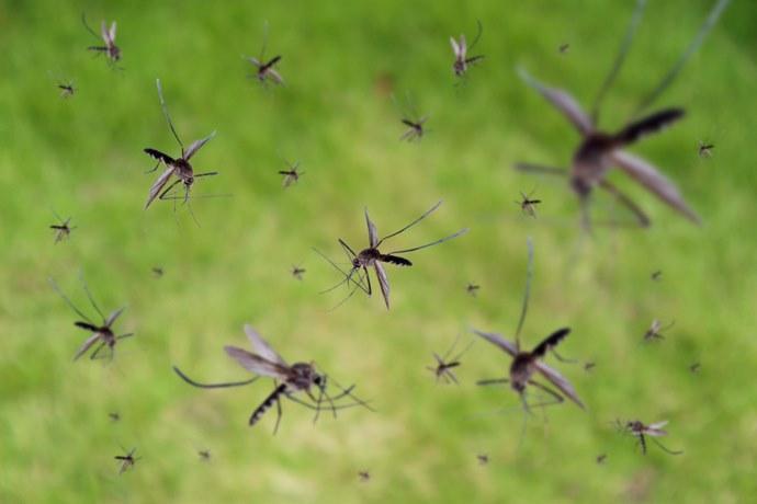 zanzare microplastiche