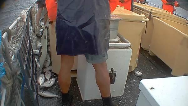 allevamento pesci2
