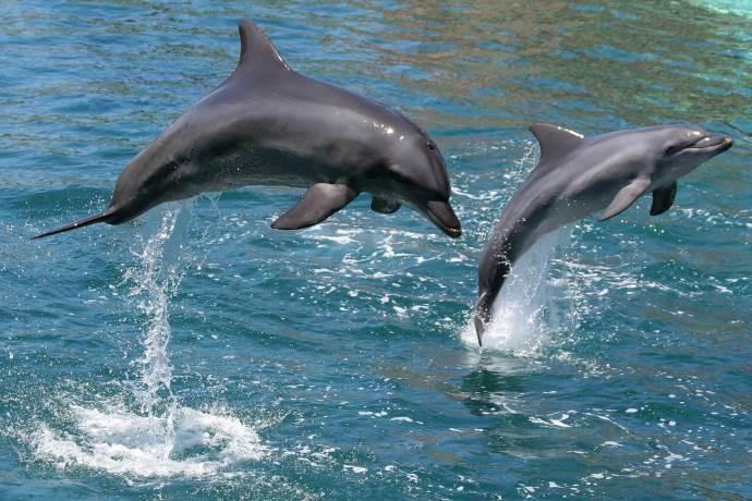 delfini-canada