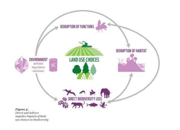 distruzione biodiv