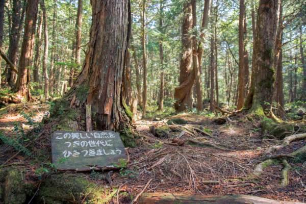 foresta giappone