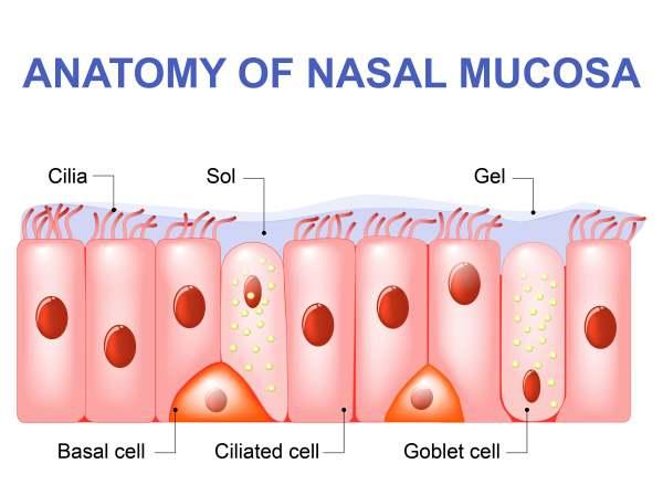mucosa nasale