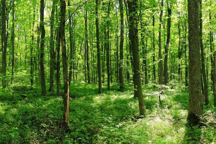 foresta che respira