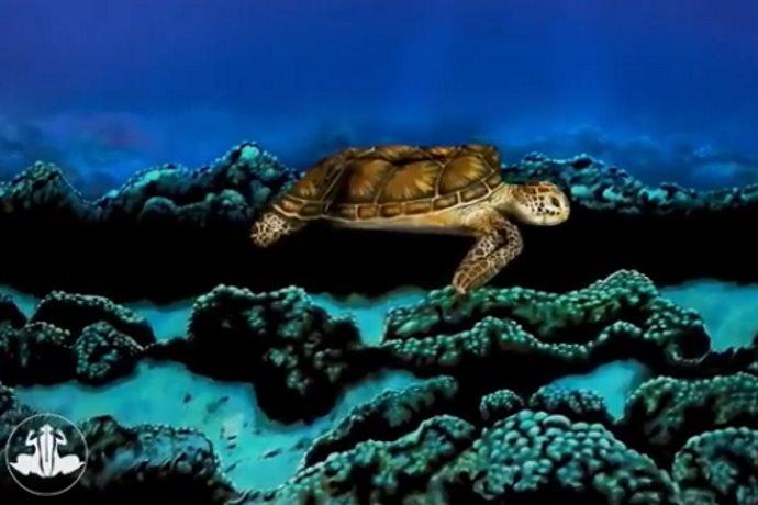 tartaruga donna
