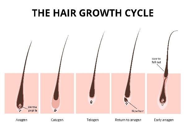 capelli ciclo