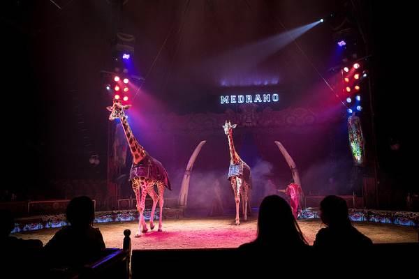 circo animali italia