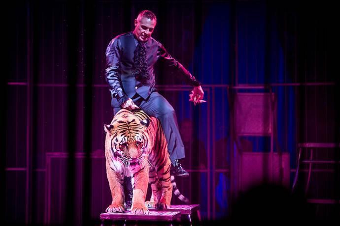 circo-animali-italia