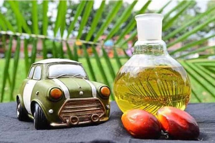 olio di palma diesel