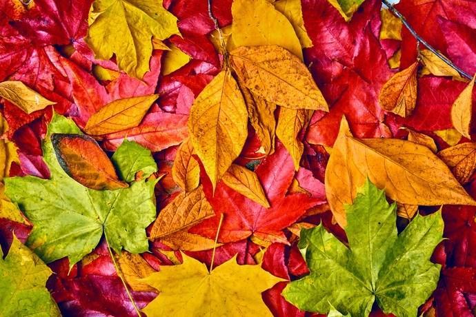 foglie autunno colore