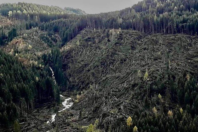 alberi sradicati Dolomiti