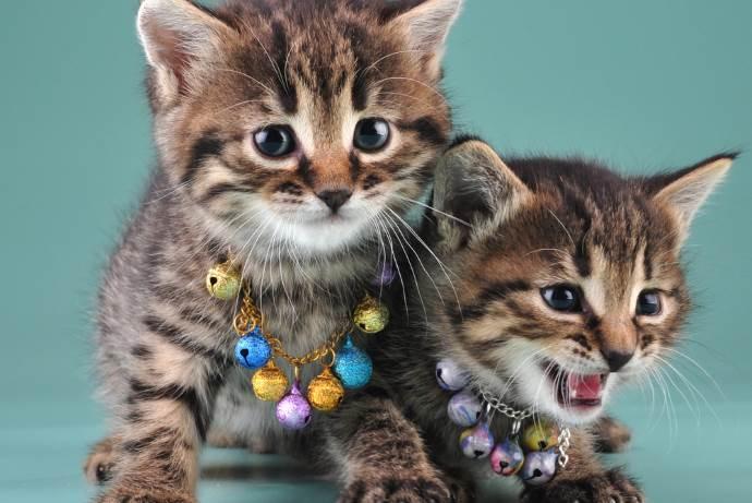 gatti-campanello