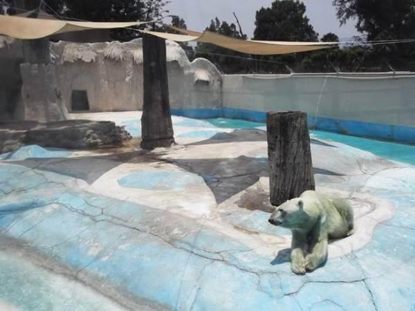 orso yupik morto