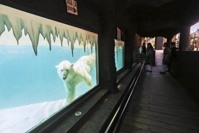 orso-yupik-morto