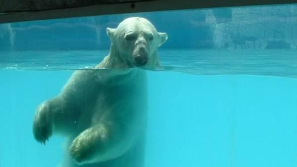 orso yupik morto2