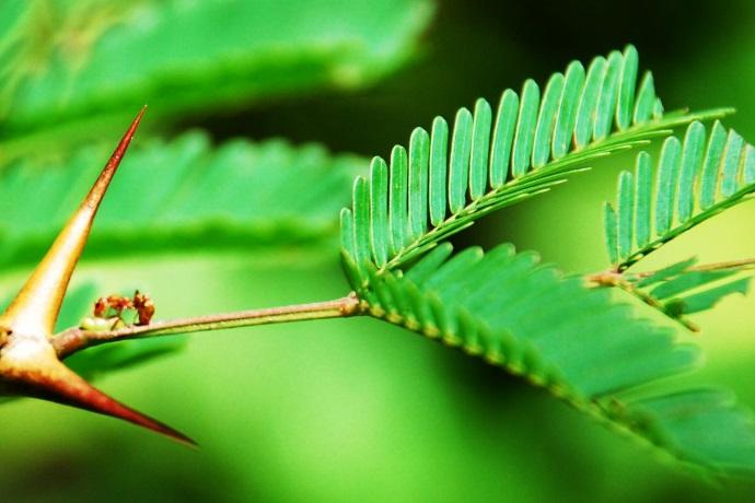 piante e formiche