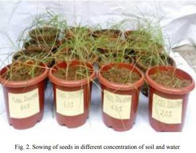 suolo bonificato pianta